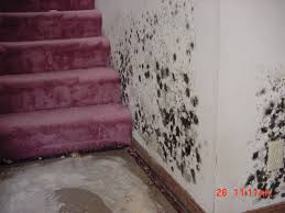 Toxicity Of Household Products by Household Products To Clean Mold With Dangers Of Mold