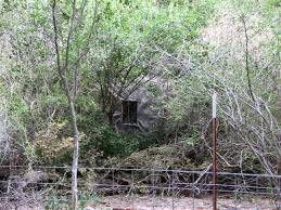 Natural Hunting Blinds Lets See Simple Diy Blinds W Cattle Panels Texasbowhunter Com