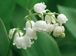 9 best flowers for garden design reader u0027s digest