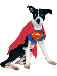 Halloween Costume Dog Dog Halloween Costumes Pet Canine Wholesale Prices