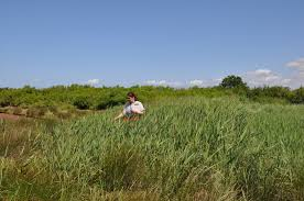 Lsu Union Help Desk by Uri Lsu Researchers Impact Of Invasive Species Varies With