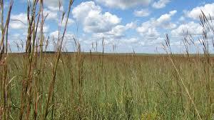 Kansas National Parks images Tallgrass prairie national preserve u s national park service jpg