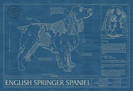 english springer spaniel animal blueprint company english springer spaniel dog blueprint