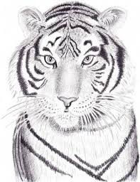 83 best tigers drawing and painting tigers images on pinterest