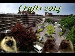 affenpinscher crufts 2014 keeshond breed video funnydog tv