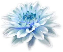 white and blue flowers flower uploaded by lemon boost on we heart it