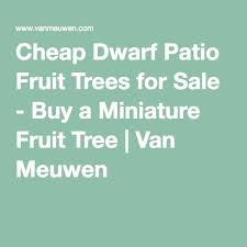 best 25 fruit trees for sale ideas on growing avocado