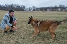 belgian sheepdog idaho i u0027ll take you home u0027 vet reunites with his military dog new york