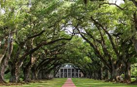 oak alley plantation floor plan day trippers the plantations of river road hilarystyle