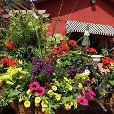 arkansas native plants shade loving plants category archives the good earth garden center