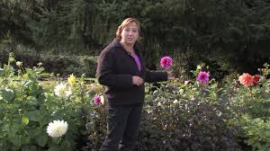 growing flower gardens how to plant a cut flower garden youtube