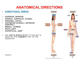 Directional Terms Human Anatomy Anatomical Regions Directions Body Cavities The Cell Ppt