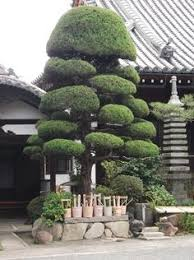 Topiary Cloud Trees - 53 stunning topiary trees gardens plants and other shapes