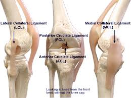 Anatomy Of Knee Injuries Shelbourne Knee Center Ligament Injuries Shelbourne Knee Center
