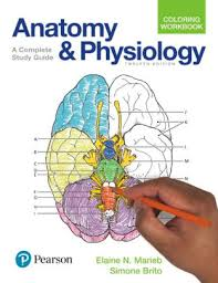 Principles Of Anatomy And Physiology Ebook Principles Of Anatomy And Physiology Edition 13 By Gerard J