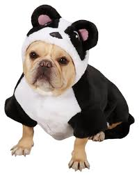 puppy background for computer halloween cute puppy costumes qemistry us