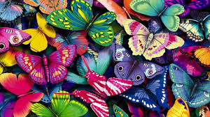 butterflies cartoon wallpaper wallppapers gallery