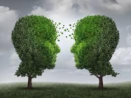 wood wide web secret communication of trees messagetoeagle