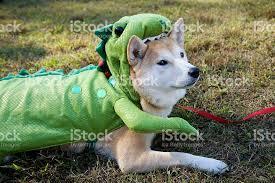 Lizard Halloween Costume Dog Green Halloween Costume Eaten Dinosaur Lizard Stock