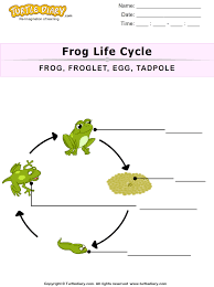 the life cycle of a frog for kids worksheet turtle diary