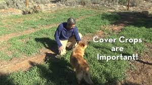 use cover crops in your vegetable garden to grow food well youtube