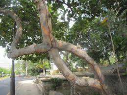 special tree roots picture of san juan san juan tripadvisor