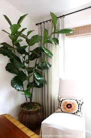 Classic Casual Home by Six Easy Care Indoor Plant Ideas Classic Casual Home