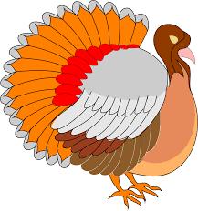 big bird thanksgiving cartoon clipart architetto tacchino