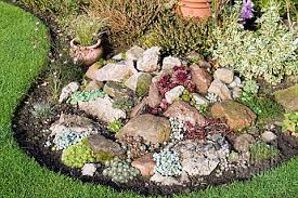 Rock Garden Succulents Lzc1140 Succulents In Rock Garden In October Asset Details