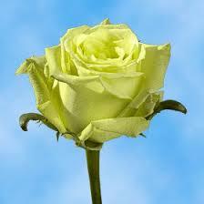 global roses globalrose 50 roses 25 25 assorted fresh cut