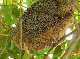 don u0027t bee lieve the latest bee pocalypse scare