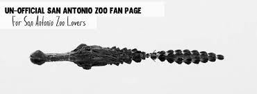 san antonio zoo lights coupon san antonio zoo coupons home facebook