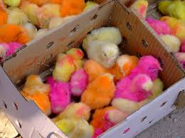 backyard chickens for sale best 25 baby chickens for sale ideas only on pinterest gazebo