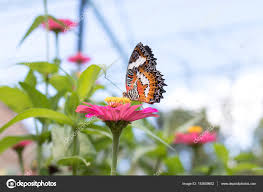 butterfly on flowers beautiful butterfly and flower in the