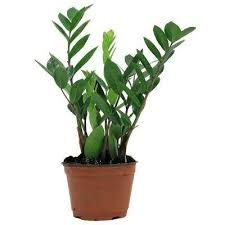 indor plants house plants indoor plants the home depot