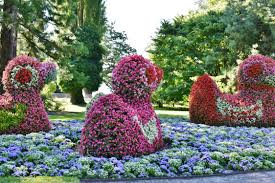 flower places free images blossom lawn bloom summer park botany flora