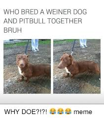 Doe Memes - who bred a weiner dog and pitbulltogether bruh why doe