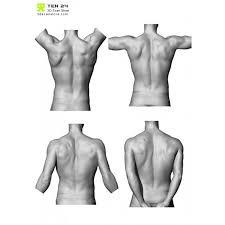 Human Anatomy Reference 272 Best Human Anatomy Male Images On Pinterest Human Anatomy