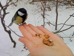 winter garden birds garden pinterest garden birds bird and