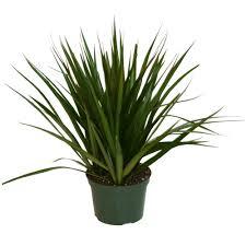house plants tropical plants rona