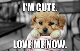 Love Me Meme - cute love memes for him and for her love dignity