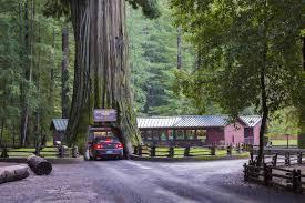 Chandelier Tree California The Drive Thru Tree