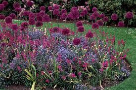 ornamental allium allium southern living