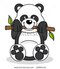 baby panda eating stock images royalty free images u0026 vectors