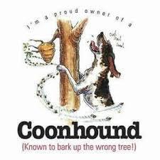 bluetick coonhound fun facts 28 best coonhound images on pinterest hound dog bluetick