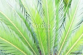 palm branches for palm sunday palm sunday concept palm branches background stock photo and