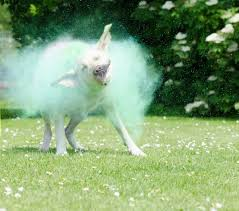 free images grass fog puppy blue colorful coloring border