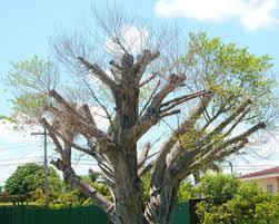 luxury tree service in miami onetwotree