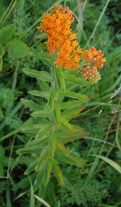native plants of illinois top 5 prairie plants for illinois properties
