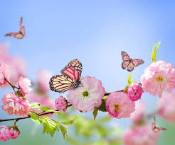 butterfly nature flowers pink flowers blossoms wallpapers hd